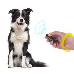 Adiestramiento de perros