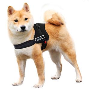 Arnés para perros