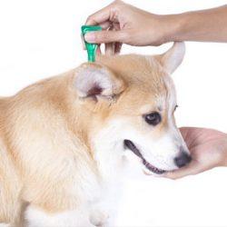 Pipetas para perros