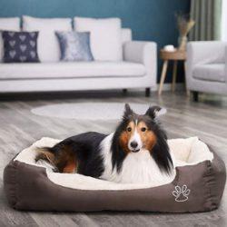 Sofás para perros